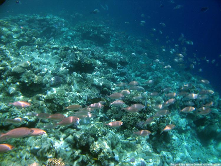 Шарм-эль-Шейх, Красное море под водой