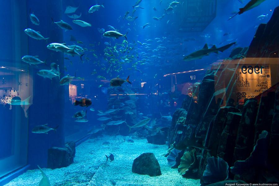 Дубай - Аквариум в Дубай Молл (23)