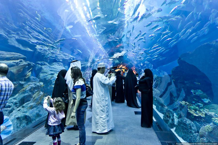 Дубай - Аквариум в Дубай Молл (13)