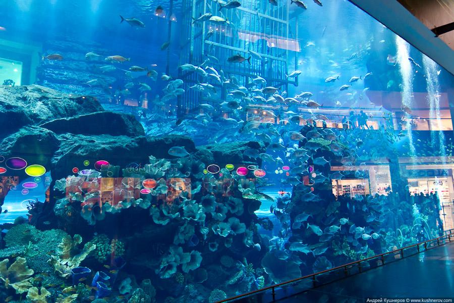 Дубай - Аквариум в Дубай Молл (2)