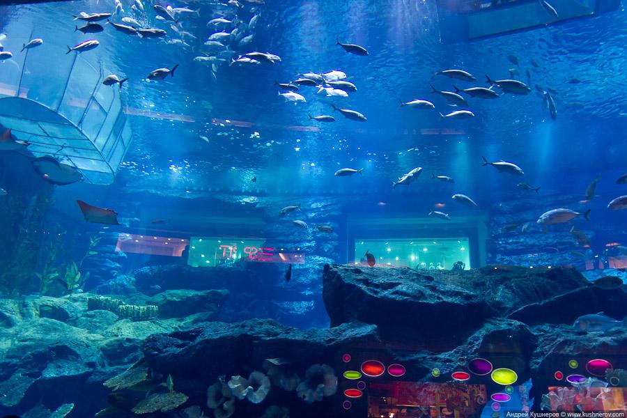 Дубай - Аквариум в Дубай Молл (1)