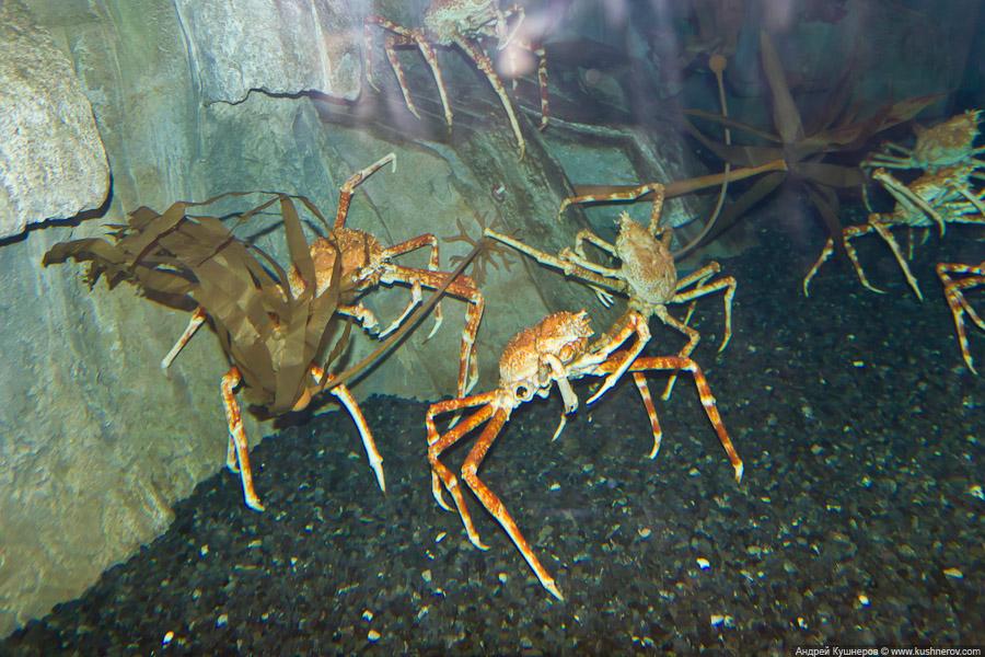 Дубай - Подводный Зоопарк (8)