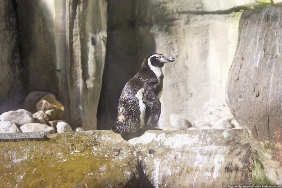 Дубай - Подводный Зоопарк (6)