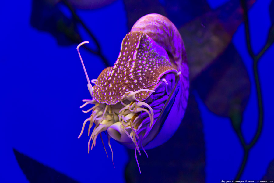 Дубай - Подводный Зоопарк (1)
