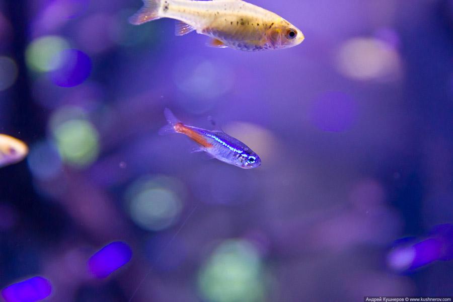 Дубай - Подводный Зоопарк (15)
