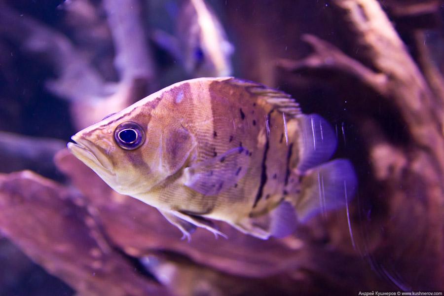 Дубай - Подводный Зоопарк (14)