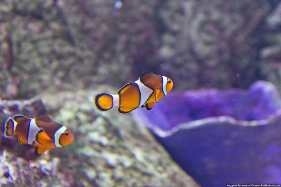 Дубай - Подводный Зоопарк (13)